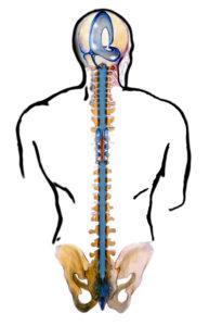 il sistema cranio sacrale in osteopatia