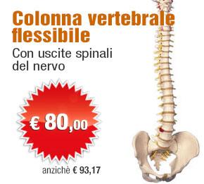 Colonna vertebrale classica