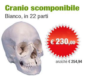 Cranio scomponibile
