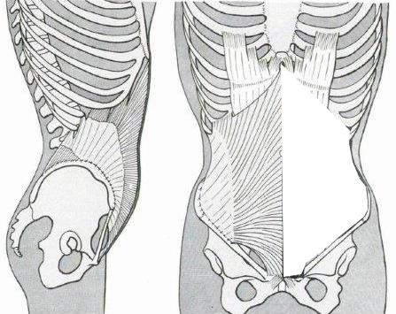 Muscolo obliquo interno