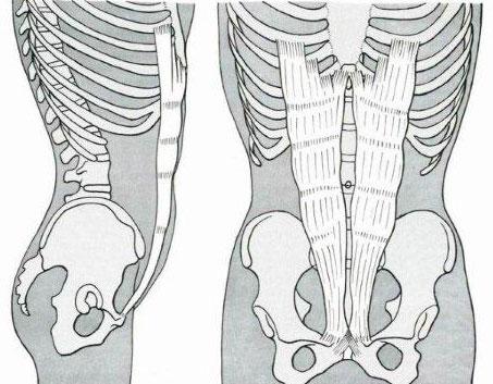 Muscolo retto dell'addome