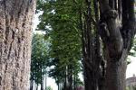 Sede part-time a Bologna, giardino